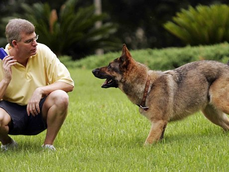 Dog training and tips