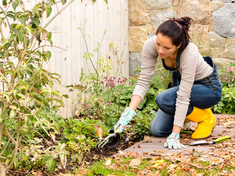 organic gardening advice