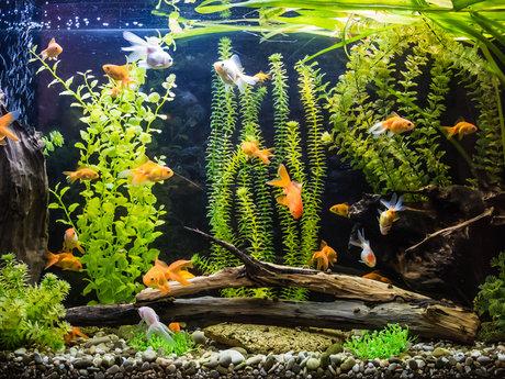 Aquarium service / consult