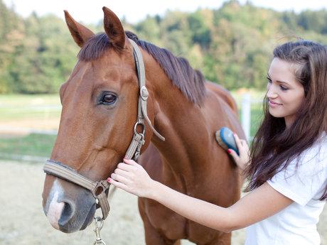 Equine Grooming