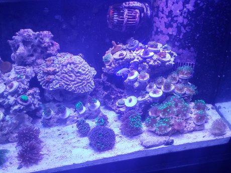 Aquarium experience/management