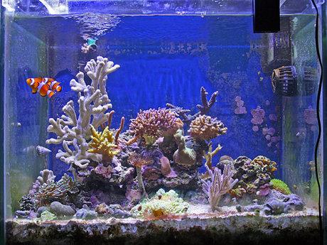 Aquascaping your aquarium!
