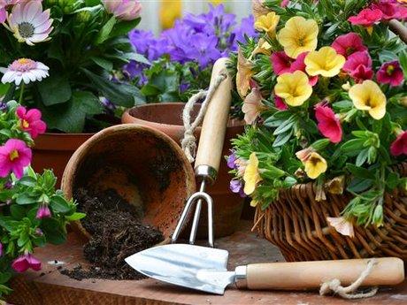 Garden planning and work