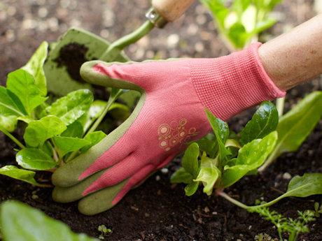 Master Gardener advice