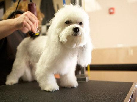 Pet grooming lite
