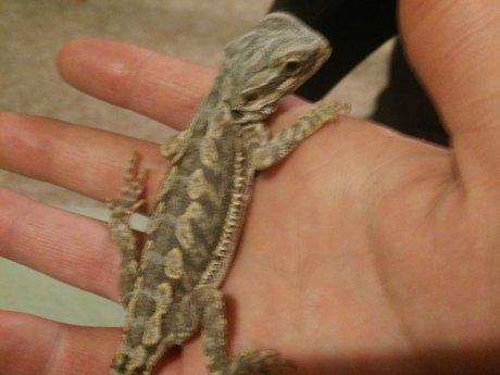 Reptile sitter