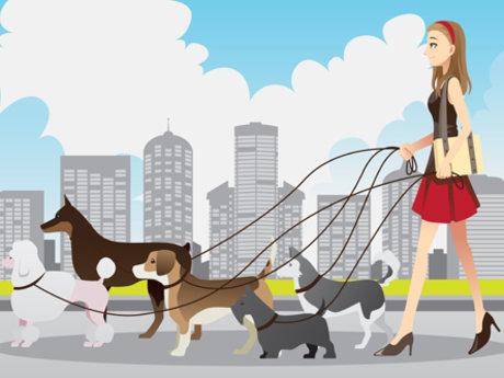 Dog walking or check ins