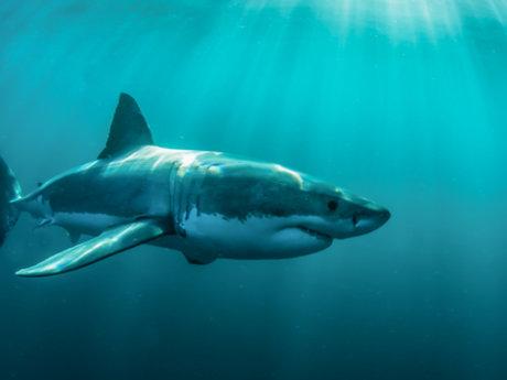 Learn a Shark Fact
