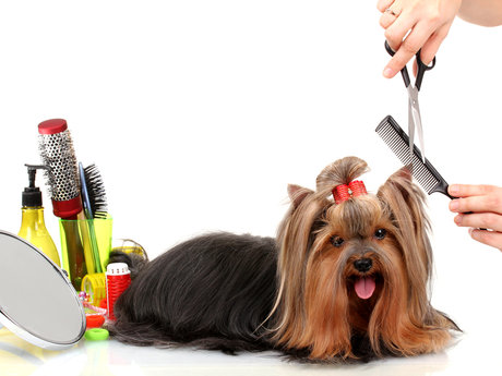 Animal grooming and care.