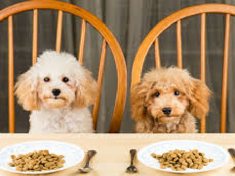 Dietary Advice for Dog Owners