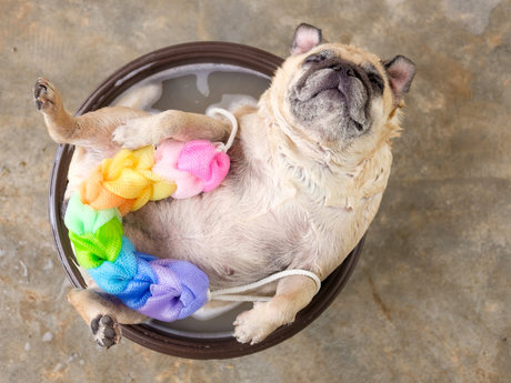 Pet sitter/bather