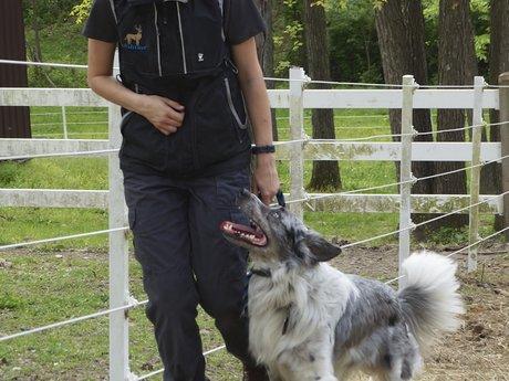 30 Minute Dog Training Consultation