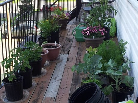 Urban Gardening Advice