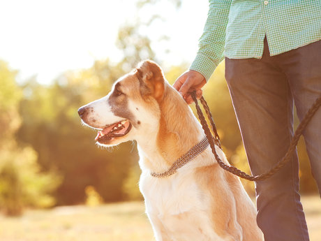 Dog walking and Nature Walks