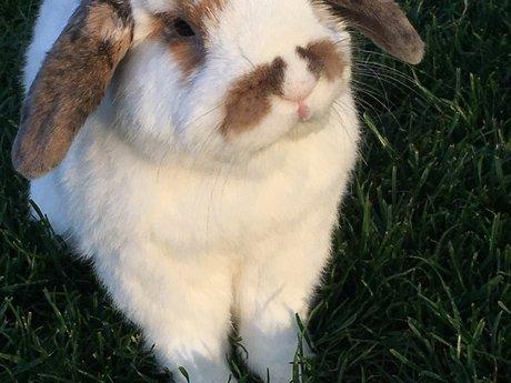 Skype with my bunny