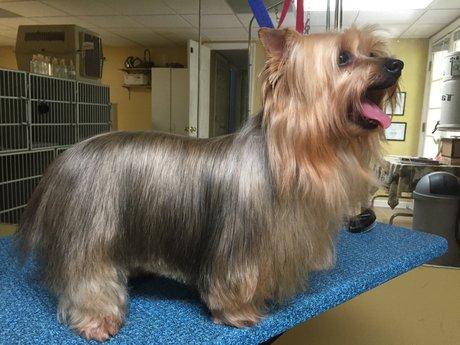 Dog groomimg