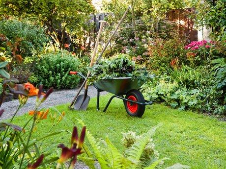 Maintain Garden