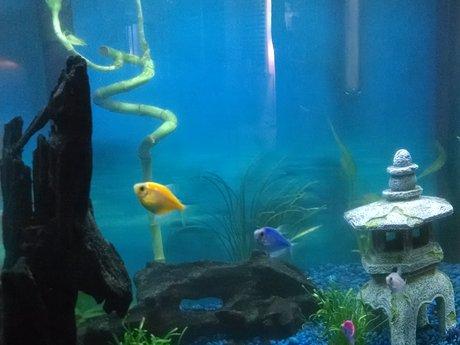 Fresh water fish tank care/advice