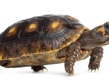 Tortoise advice