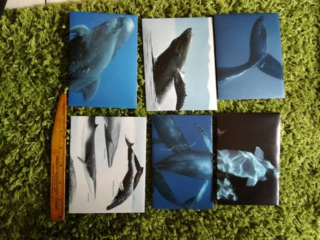6Nat geo whale envelopes