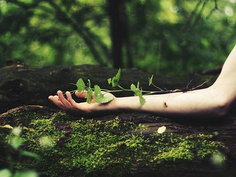 An Introduction to Earth Medicine