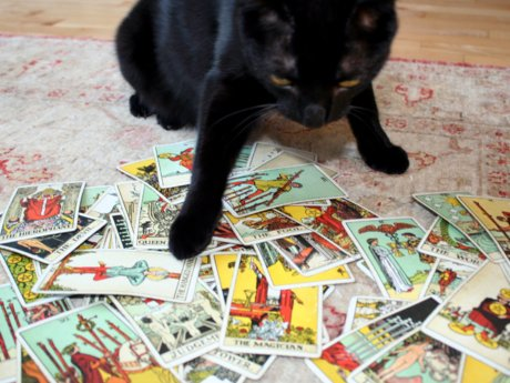 Tarot reading for your Cat