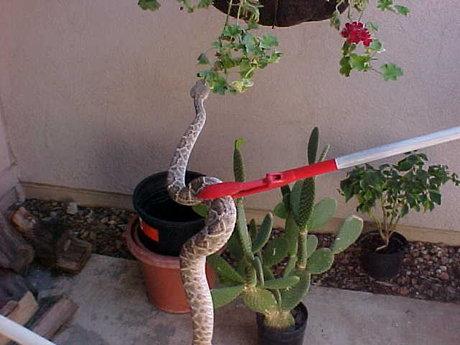 Reptile removal