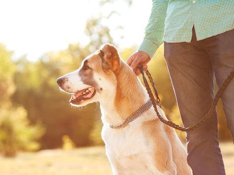 Canine Wellness Consultations