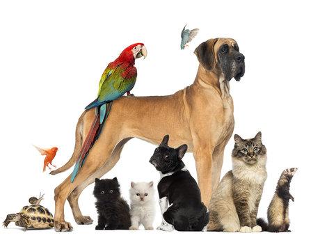 Exotic Pet Consultant