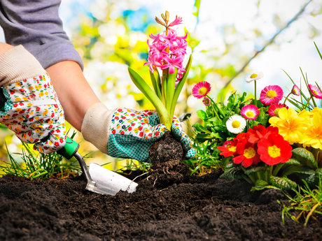 Curb appeal garden consultation