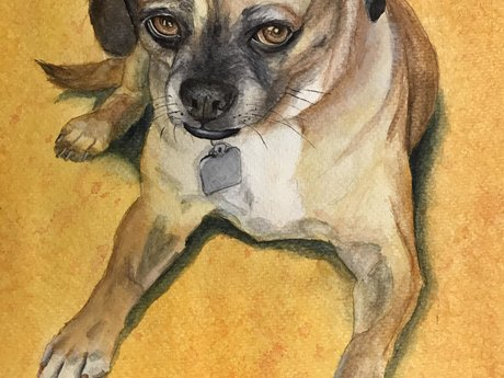 Pet portrait 6x8 watercolor