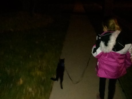Guide to train cat go for  walks