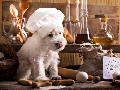 Healthy dog food cooking leasions