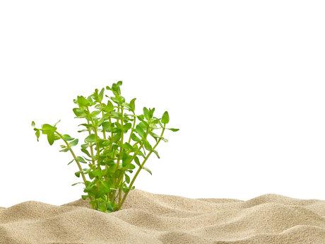 Medicinal plant horticulturist ,