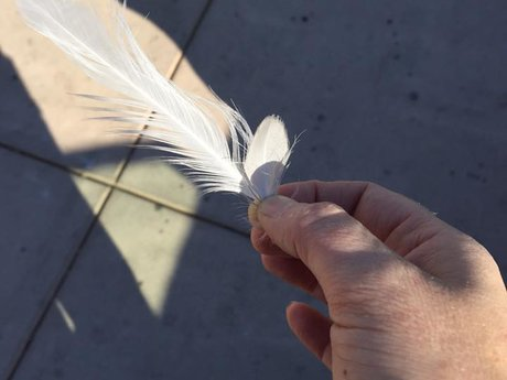 Mail you a feather