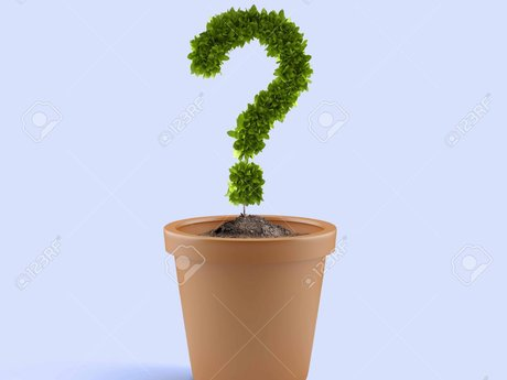 Mystery Plant Seeds Gift