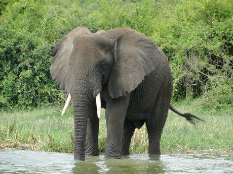Uganda safari consultant