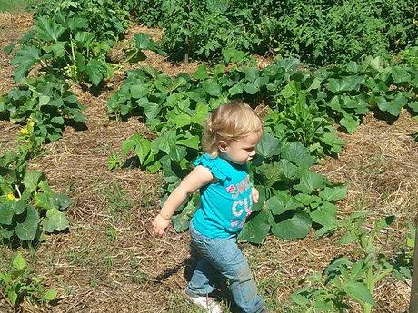 Organic garden planning