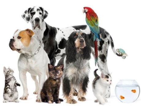 Pet Sitter (Houseplants, too)