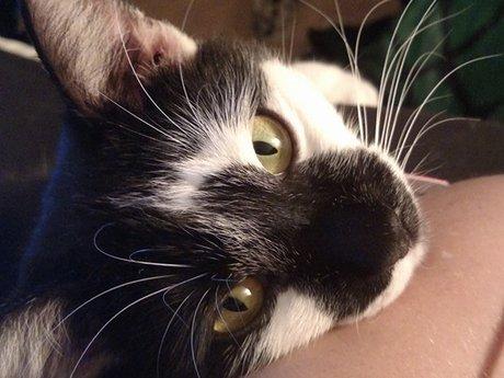 Cutest Cat Photos