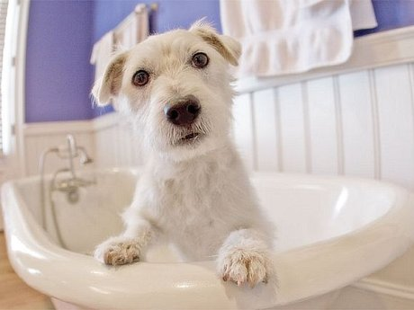 Pet Grooming at Home