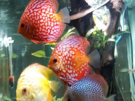 Pet names for your fish(es)