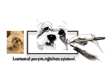 Pet drawing portraits
