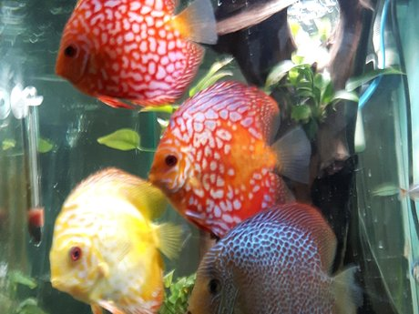Relax with a fish tank video