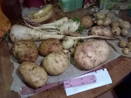 Gardening/houseplants advice