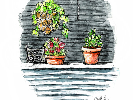 Plants on a Porch Watercolor & Ink