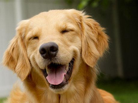 Active Lifelong Dog Enthusiast