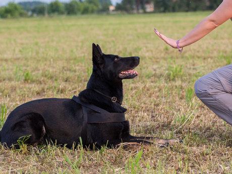 Service dog training help
