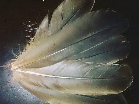 Goose Feather Hair Clip