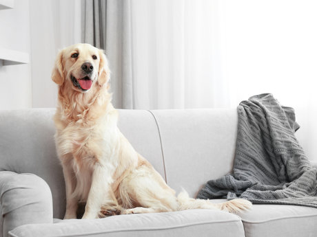 House Sitting/Pet Sitting